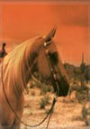 The Western Horse WebRing